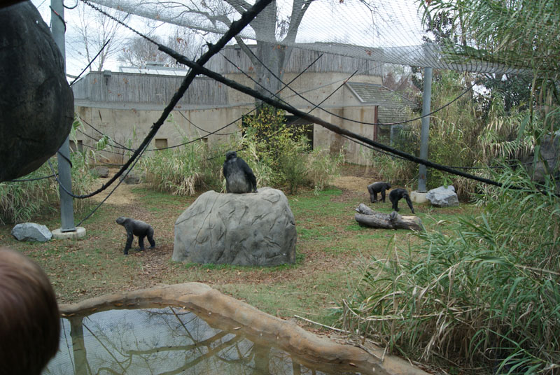 Chattanooga Zoo Review Details And Pictures